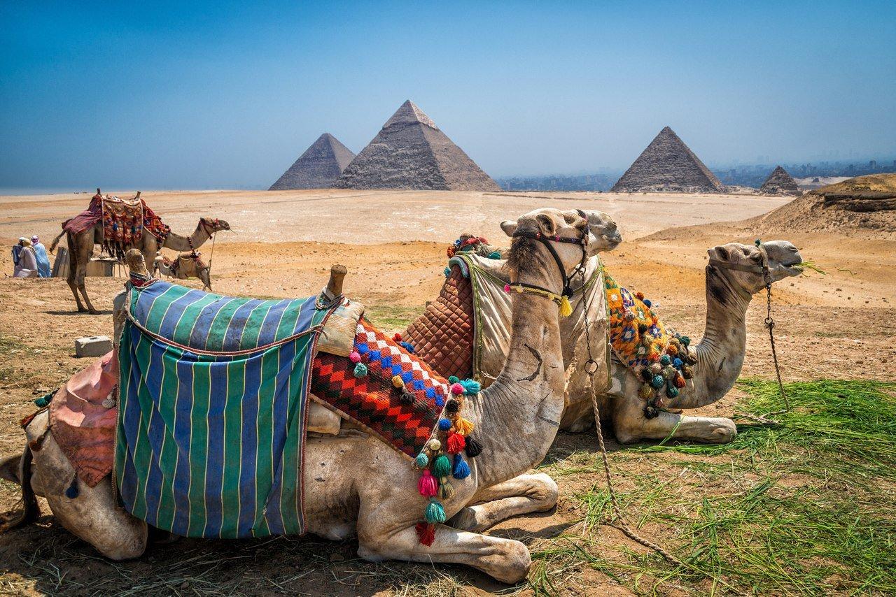 Египет когда откроют 2020 квартиры в банско
