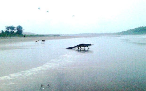 Крокодил на пляже 89